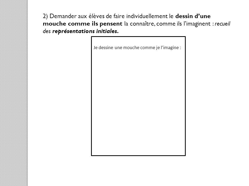 2) Demander aux élèves de faire individuellement le dessin dune mouche comme ils pensent la connaître, comme ils limaginent : recueil des représentati