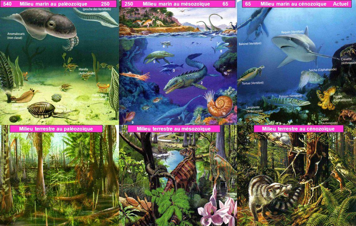 540 Milieu marin au paléozoïque 250250 Milieu marin au mésozoïque 6565 Milieu marin au cénozoïque Actuel Milieu terrestre au paléozoïqueMilieu terrest