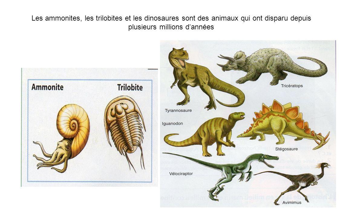 Les ammonites, les trilobites et les dinosaures sont des animaux qui ont disparu depuis plusieurs millions dannées