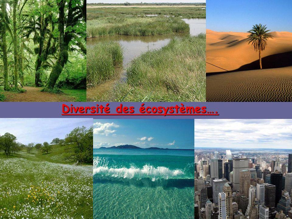 Diversité des écosystèmes….