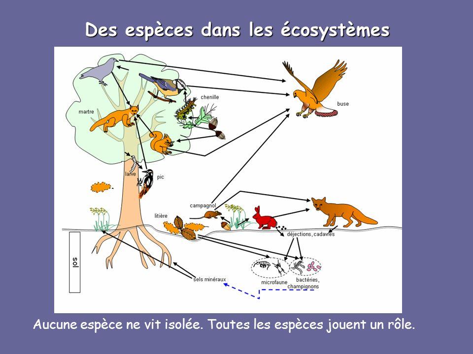 Des espèces dans les écosystèmes Aucune espèce ne vit isolée. Toutes les espèces jouent un rôle.