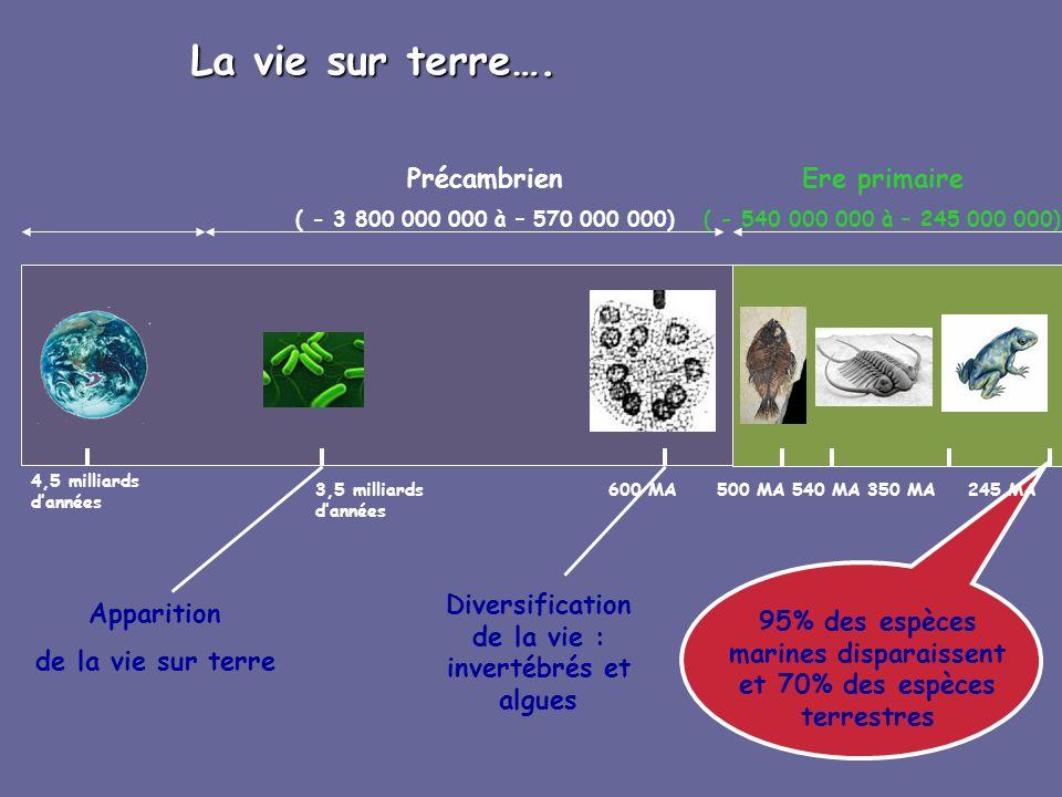 4,5 milliards dannées 3,5 milliards dannées 600 MA500 MA350 MA La vie sur terre…. Précambrien ( - 3 800 000 000 à – 570 000 000) Ere primaire ( - 540