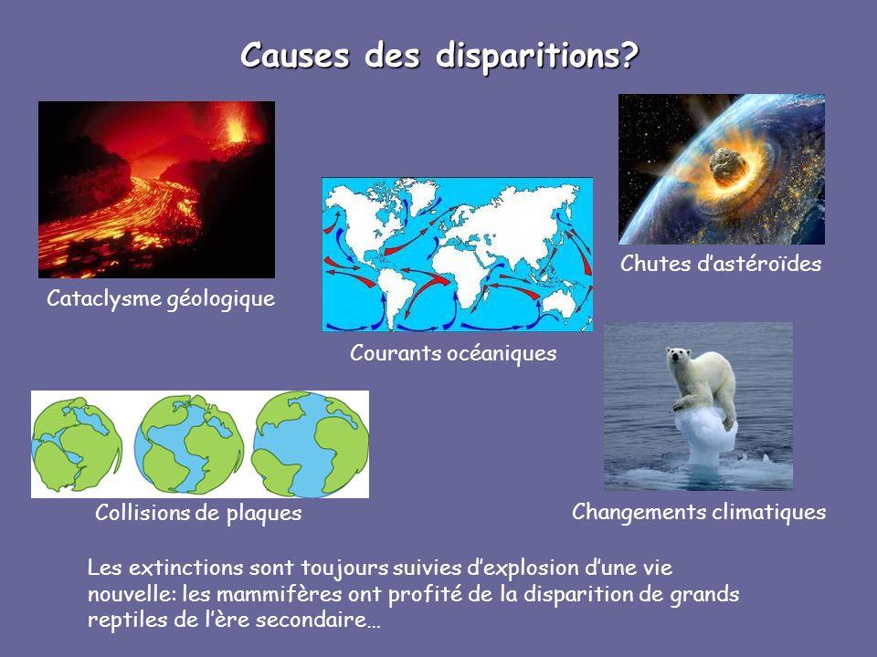 Causes des disparitions? Les extinctions sont toujours suivies dexplosion dune vie nouvelle: les mammifères ont profité de la disparition de grands re