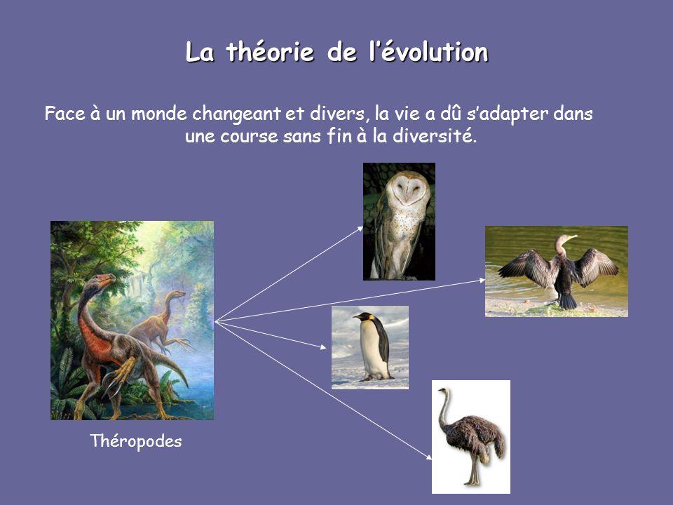 La théorie de lévolution Face à un monde changeant et divers, la vie a dû sadapter dans une course sans fin à la diversité. Théropodes