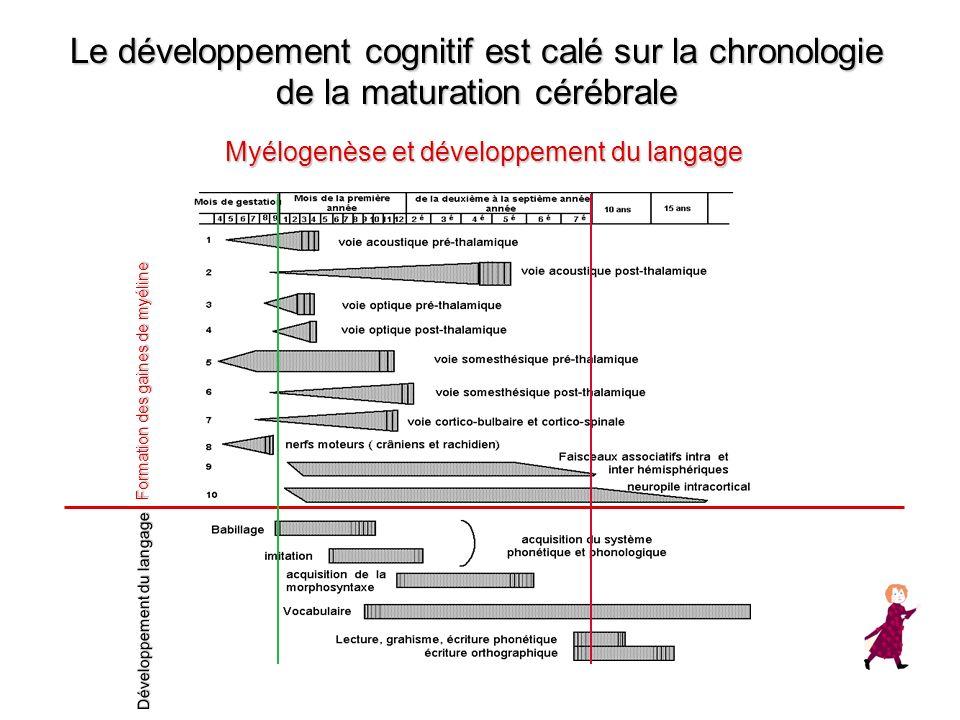 Le développement cognitif est calé sur la chronologie de la maturation cérébrale Myélogenèse et développement du langage Formation des gaines de myéli