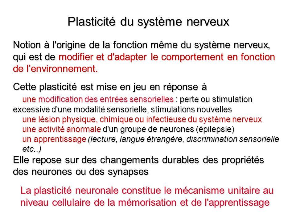 Plasticité du système nerveux Notion à l'origine de la fonction même du système nerveux, qui est de modifier et d'adapter le comportement en fonction