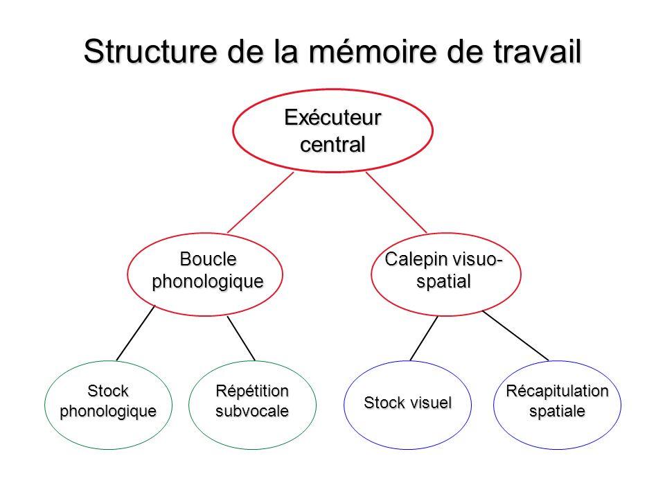 Structure de la mémoire de travail Exécuteur central Boucle phonologique Calepin visuo- spatial Stock phonologique Stock visuel Répétition subvocale R