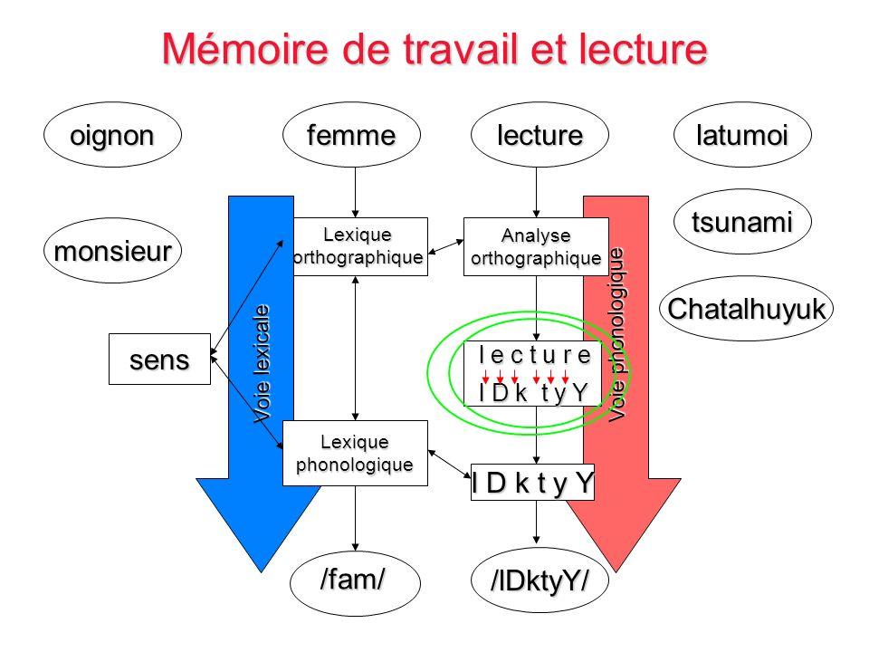 latumoi Chatalhuyuk oignon monsieur tsunami lecture /lDktyY/ Voie phonologique Analyseorthographique l D k t y Y l e c t u r e l e c t u r e l D k t y