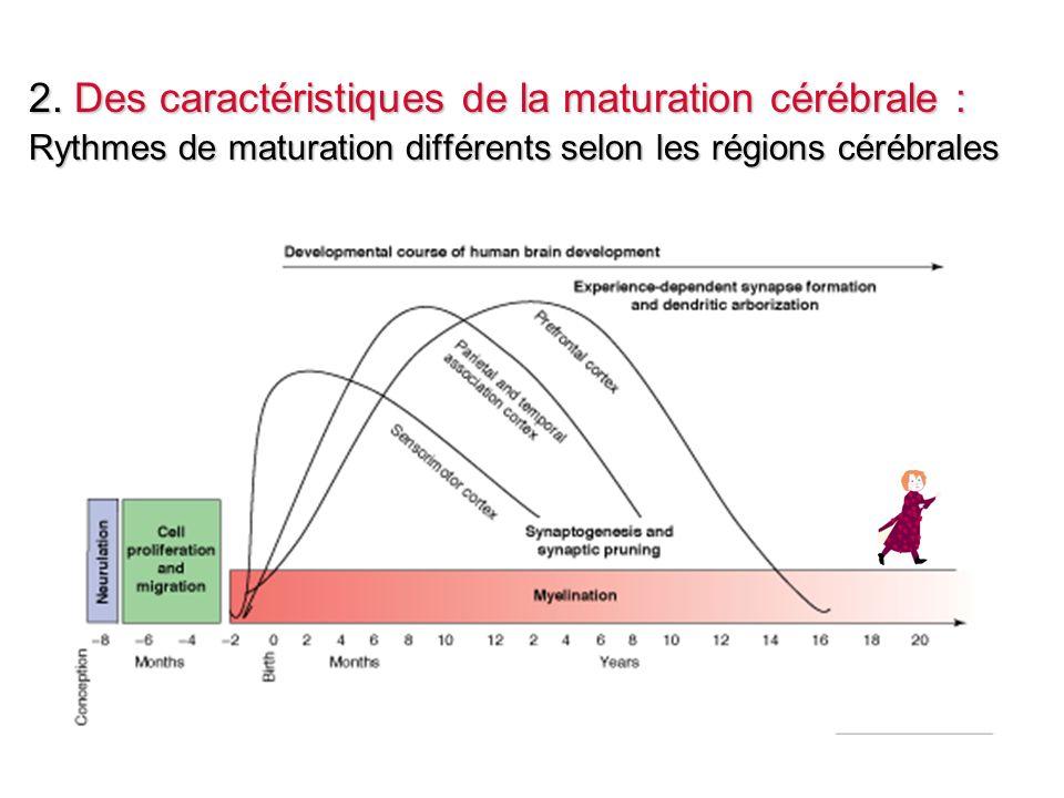 2. Des caractéristiques de la maturation cérébrale : Rythmes de maturation différents selon les régions cérébrales