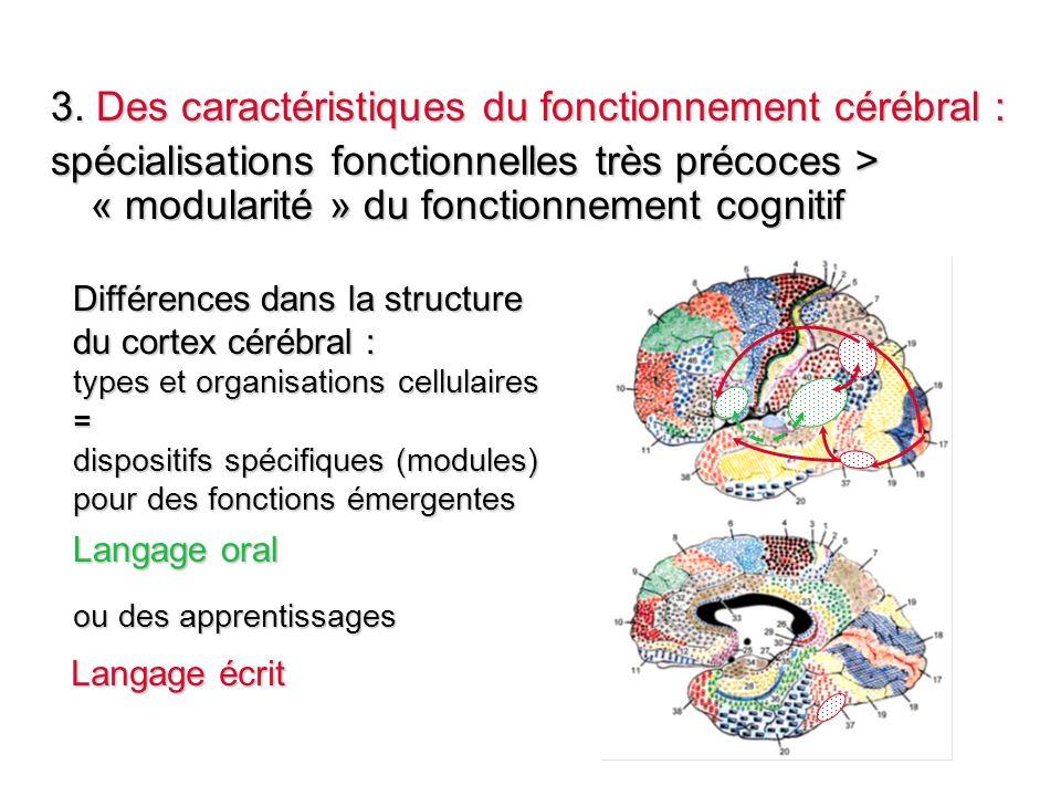 3. Des caractéristiques du fonctionnement cérébral : spécialisations fonctionnelles très précoces > « modularité » du fonctionnement cognitif Différen