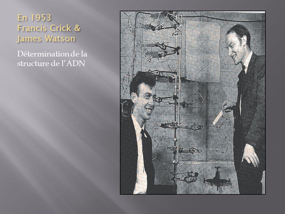 En 1953 Francis Crick & James Watson Détermination de la structure de lADN