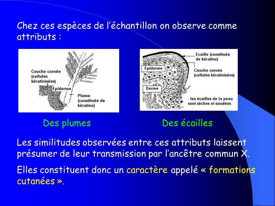 Ces 4 espèces possèdent dans lhistoire de la vie un ancêtre commun X
