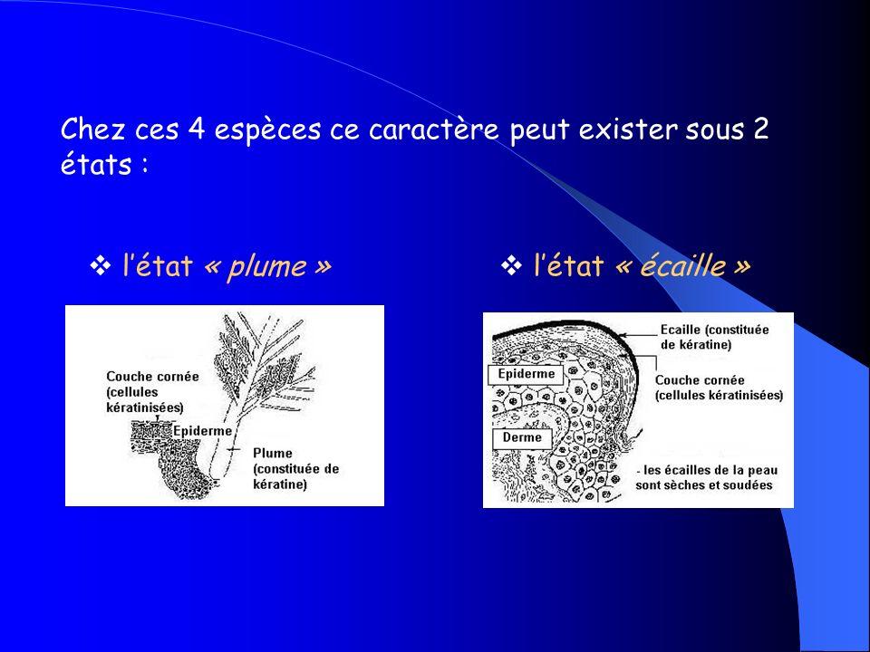 Chez ces espèces de léchantillon on observe comme attributs : Des plumesDes écailles Les similitudes observées entre ces attributs laissent présumer de leur transmission par lancêtre commun X.