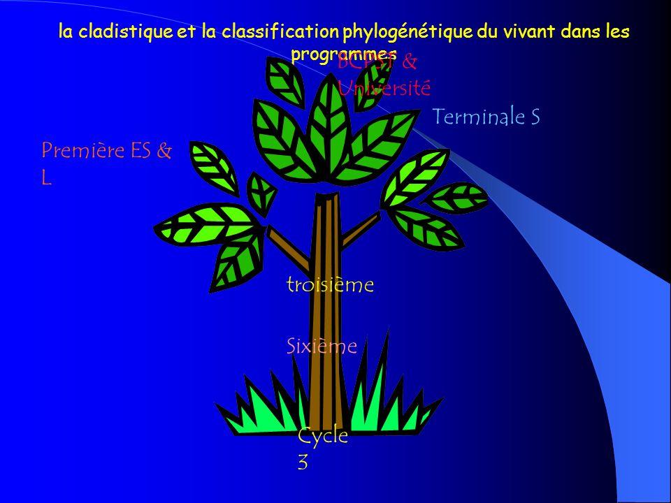 Dune classification phylogénétique à la phylogenèse… Formation continue SVT Année 2008-2009 Ou… Comment fabriquer un arbre à partir de boîtes ?