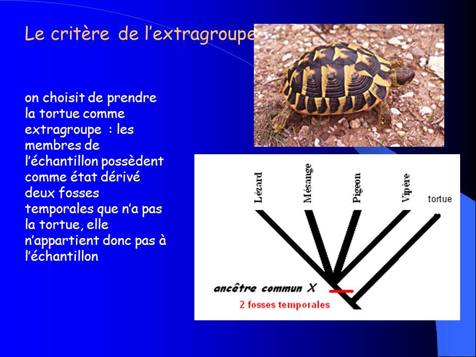 Le critère ontogénétique : Le bourgeon épidermique préfigure lécaille et dans le développement de lépiderme dun oiseau il se transforme en plumes.