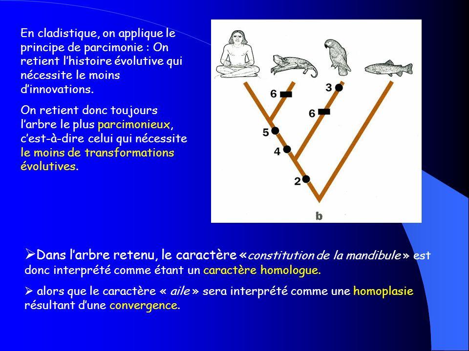 Ici Létat dérivé de la constitution de la mandibule est un état dérivé partagé par lHomme et la chauve-souris.