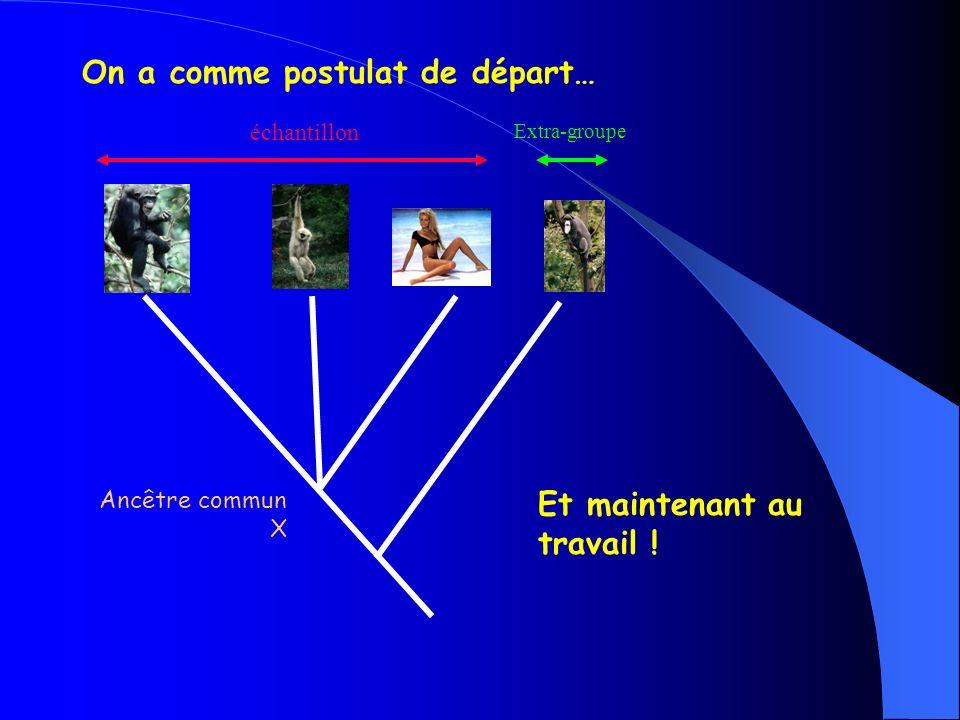 Activité : On cherche à préciser les relations de parenté au sein dun échantillon de 3 espèces.