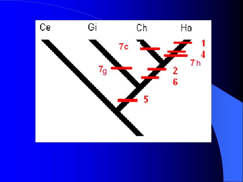Pour éviter ceci on peut utiliser des autapomorphies du Gibbon et du Chimpanzé : caractèresHommeChimpanz é GibbonCercopithèq ue 1- pilositéLocalisée 1 Etendue 0 Etendue 0 Etendue 0 2- nombre de carpiens 8181 8181 9090 9090 3- nombre de dents 32 0 32 0 32 0 32 0 4- taille de la canine Faible 1 Forte 0 Forte 0 Forte 0 5- queueAbsente 1 Absente 1 Absente 1 Longue 0 6- os maxillaire (mx) et prémaxillaire (pmx) Rapprochés 1 Rapproché s 1 Eloignés 0 Eloignés 0 7-locomotionBipédie 1 Knuckle- walking 1 Brachiation 1 Quadrupédi e 0