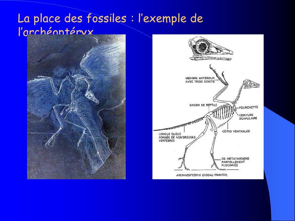 Le programme de 3 ème signale que « des groupes d organismes vivants… ont pu disparaître ».