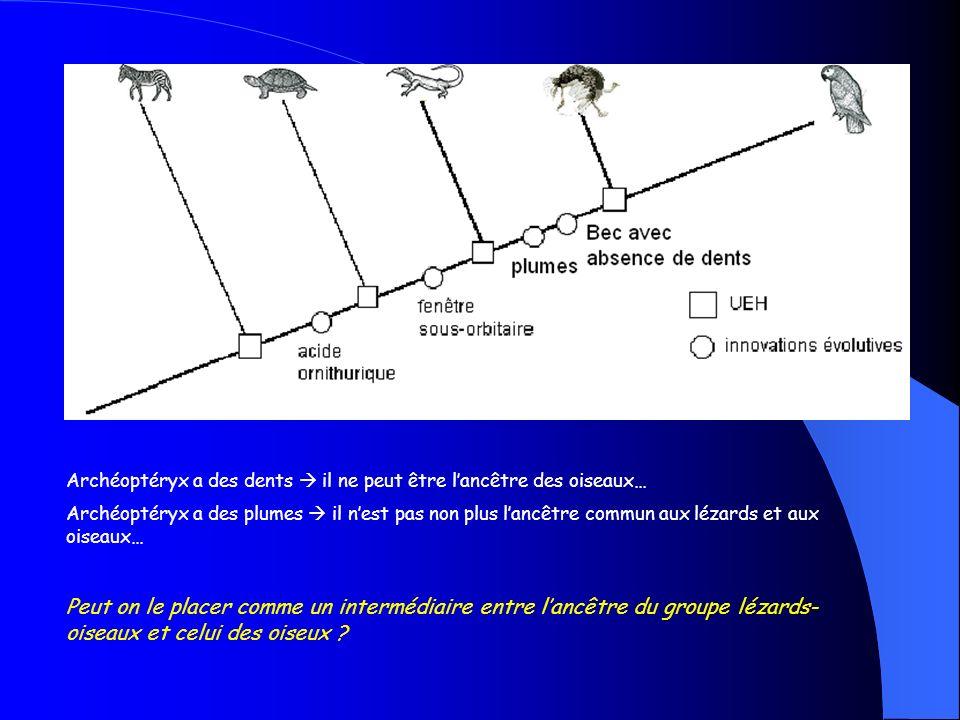 La place des fossiles : lexemple de larchéoptéryx…