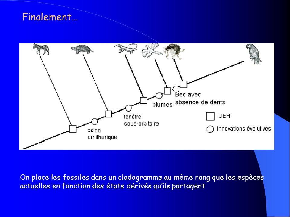Archéoptéryx est un candidat possible, mais… - il existe peut être dautres espèces disparues qui possédaient les mêmes caractéristiques et qui pourraient être daussi bons candidats… - Le placer là sans douter de sa place, cest faire saffronter… Jean-Baptiste De Lamarck (1744-1829) VS Charles Darwin (1809-1882)