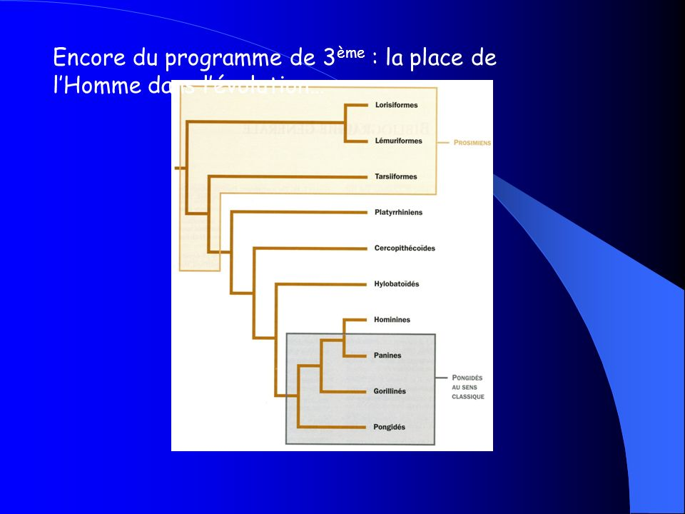 finalement, la cladistique… - cest une méthode de classement des êtres vivants basée sur le partage de létat dérivé dhomologies révélées par la construction de cladogrammes.