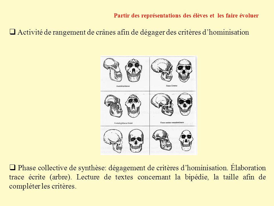 Activité de rangement de crânes afin de dégager des critères dhominisation Partir des représentations des élèves et les faire évoluer Phase collective