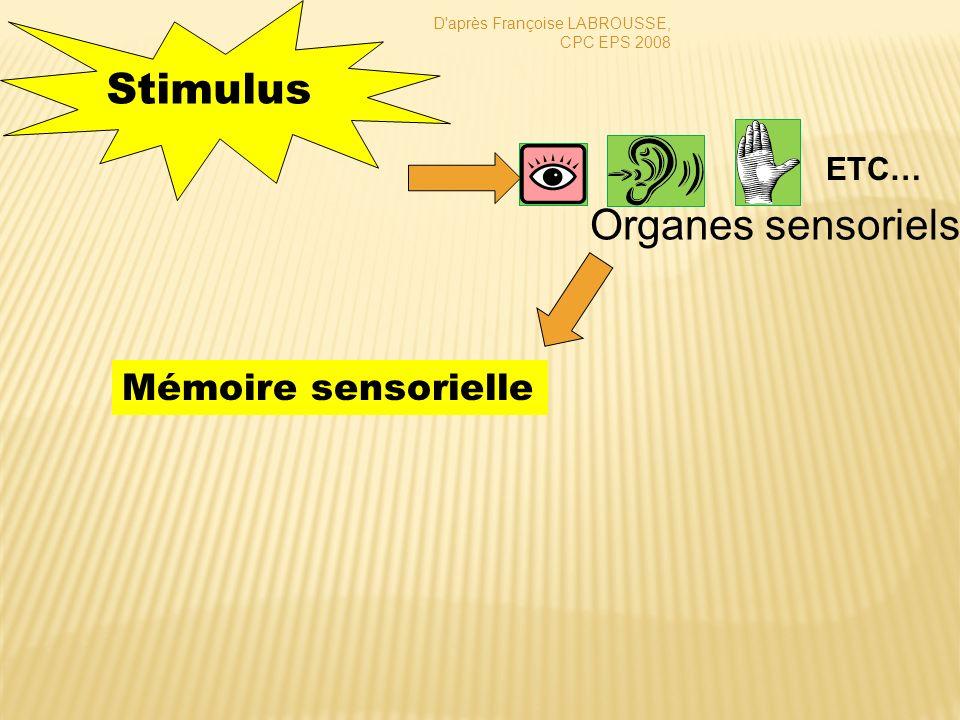 Mémoire sensorielle Stimulus Organes sensoriels D'après Françoise LABROUSSE, CPC EPS 2008 ETC…