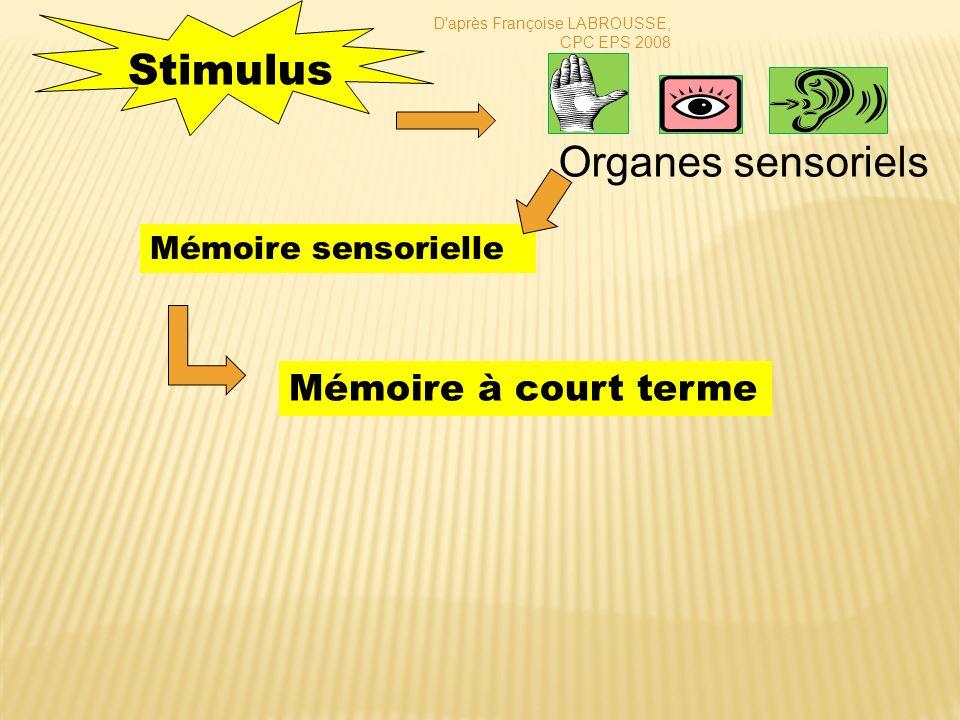 Mémoire à court terme = mémoire immédiate Stimulus Organes sensoriels Mémoire sensorielle Mémoire à long terme D après Françoise LABROUSSE, CPC EPS 2008