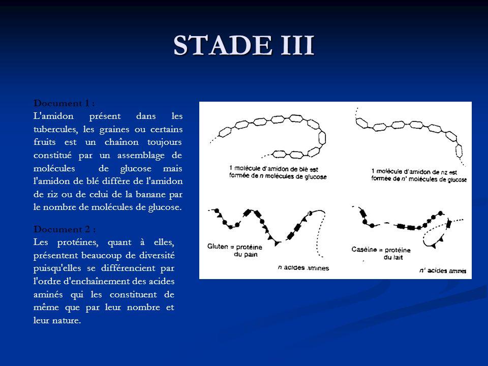 STADE III Document 1 : L'amidon présent dans les tubercules, les graines ou certains fruits est un chaînon toujours constitué par un assemblage de mol