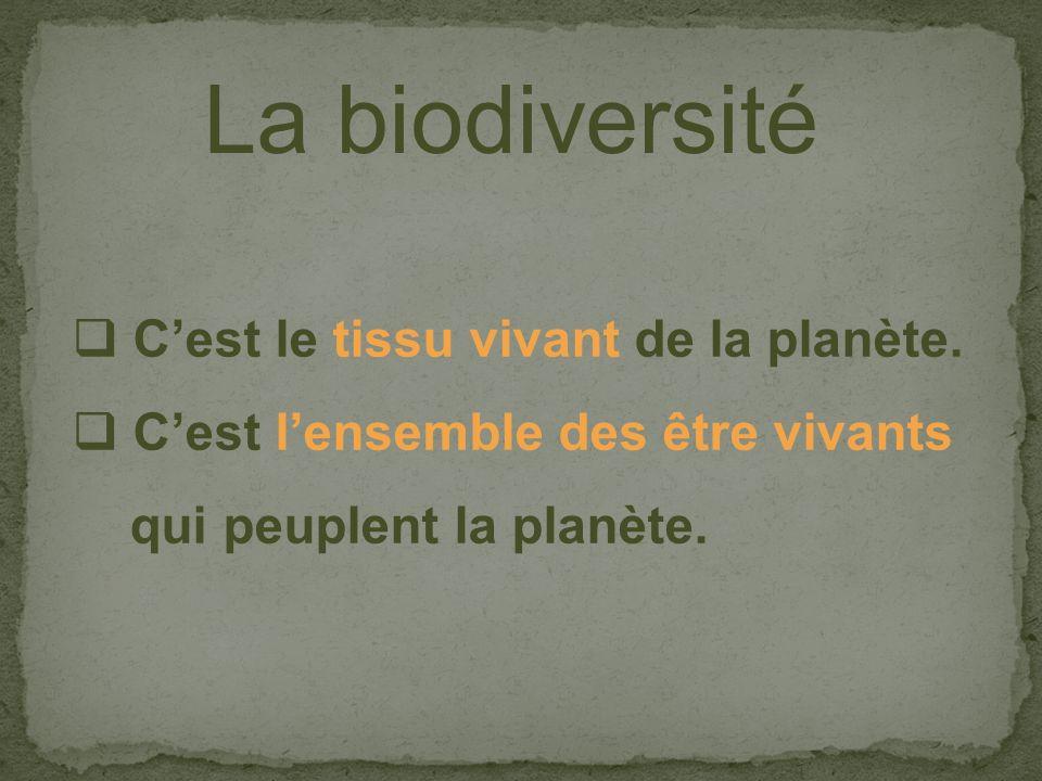 École HEIDELBERG, Philippe BARBERA Mai 2010 Et lhomme dans tout çà ? La biodiversité
