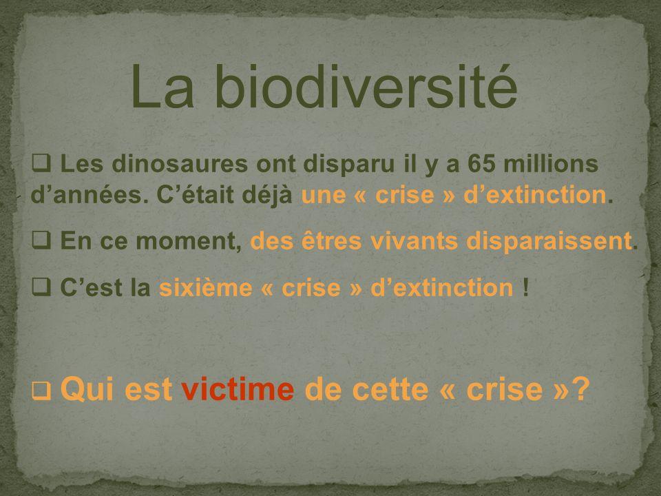 Les dinosaures ont disparu il y a 65 millions dannées.