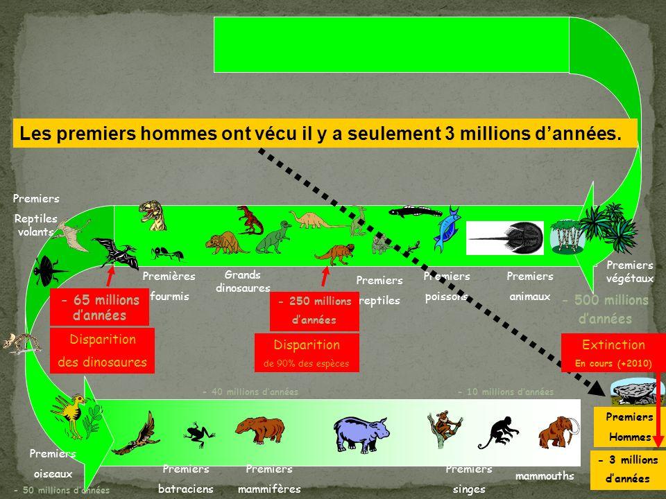 Premiers végétaux Premiers animaux Premiers poissons Premiers reptiles Premières fourmis Grands dinosaures Premiers Reptiles volants Disparition des dinosaures Premiers oiseaux Premiers batraciens Premiers mammifères Premiers singes mammouths Premiers Hommes - 250 millions dannées - 500 millions dannées - 3 millions dannées - 65 millions dannées - 50 millions dannées - 40 millions dannées- 10 millions dannées Disparition de 90% des espèces Les premiers hommes ont vécu il y a seulement 3 millions dannées.
