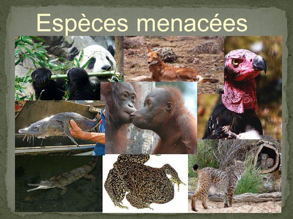Premiers végétaux Premiers animaux Premiers poissons Premiers reptiles Premières fourmis Grands dinosaures Premiers Reptiles volants Disparition des d