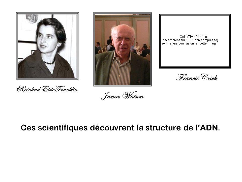 Francis Crick James Watson Rosalind Elsie Franklin Ces scientifiques découvrent la structure de lADN.