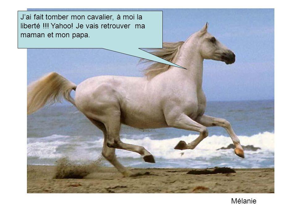 Jai fait tomber mon cavalier, à moi la liberté !!.