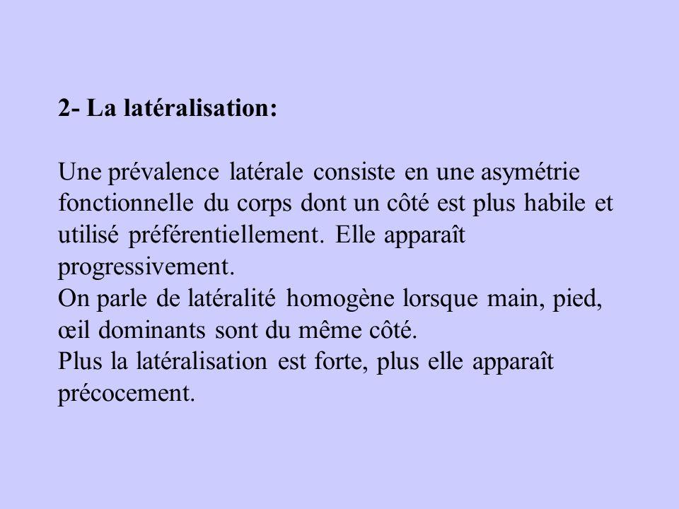 2- La latéralisation: Une prévalence latérale consiste en une asymétrie fonctionnelle du corps dont un côté est plus habile et utilisé préférentiellem