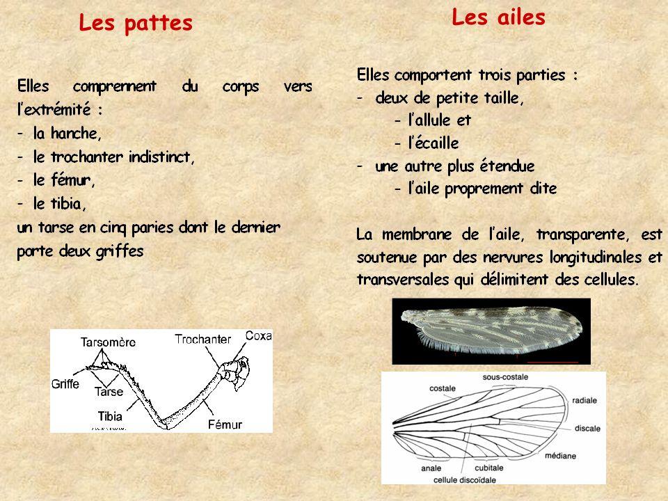 Cycle de vie du moustique trois périodes : * phase aquatique pré-imaginale -la larve (période de croissance - la nymphe (moins mobile) *une phase aérienne, -ladulte,(période de reproduction sans croissance).