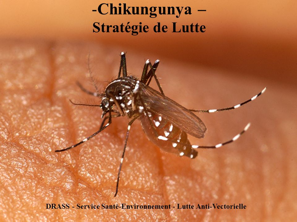 -Chikungunya – Stratégie de Lutte DRASS - Service Santé-Environnement - Lutte Anti-Vectorielle