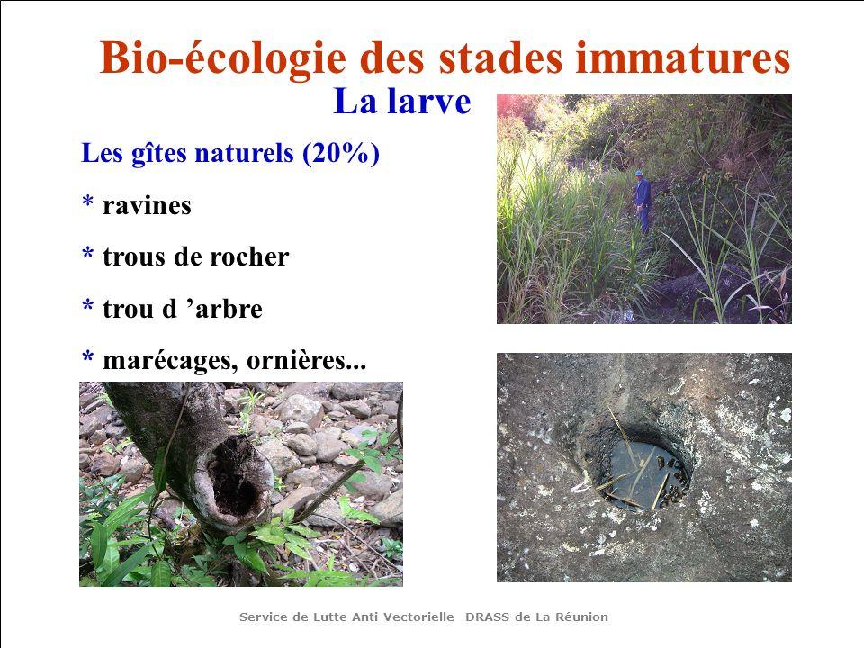 Les gîtes naturels (20%) * ravines * trous de rocher * trou d arbre * marécages, ornières... Service de Lutte Anti-Vectorielle DRASS de La Réunion Bio