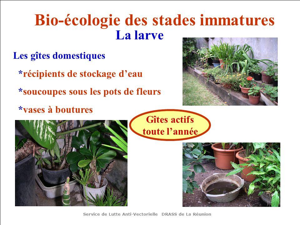 Les gîtes domestiques *récipients de stockage deau *soucoupes sous les pots de fleurs *vases à boutures Gîtes actifs toute lannée Service de Lutte Anti-Vectorielle DRASS de La Réunion Bio-écologie des stades immatures La larve
