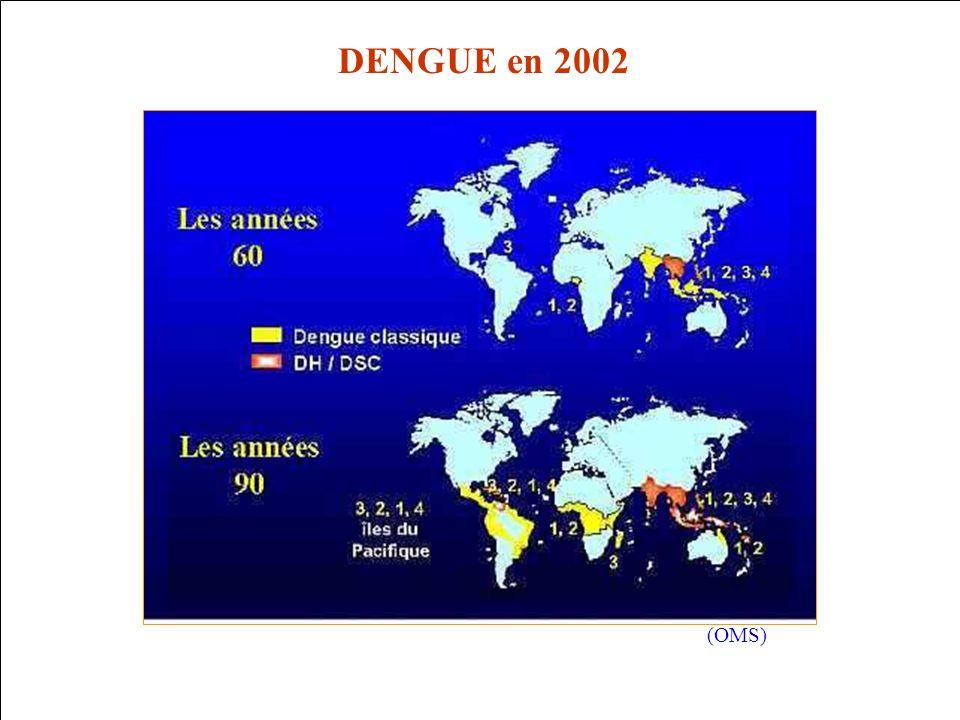 (OMS) DENGUE en 2002