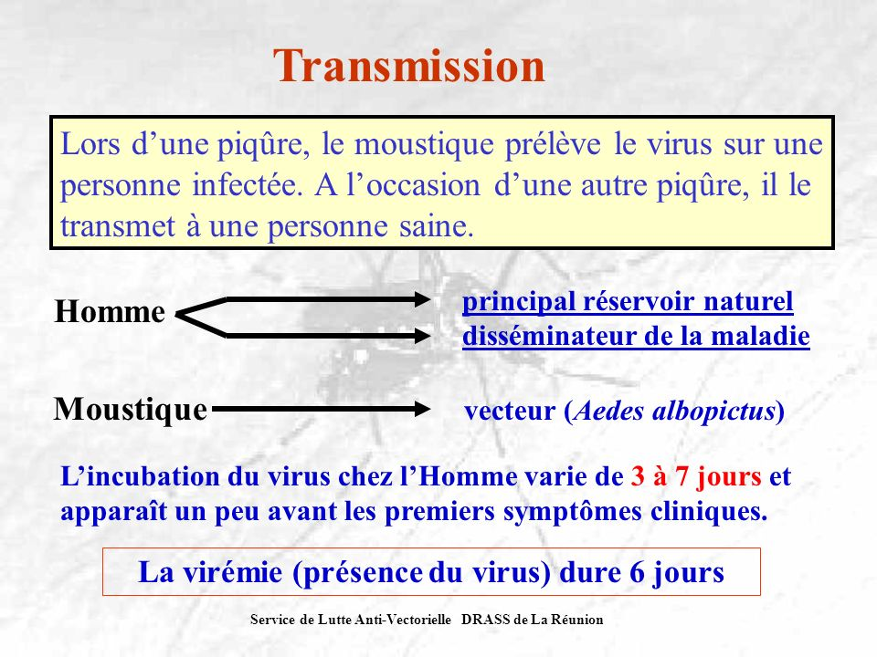 Service de Lutte Anti-Vectorielle DRASS de La Réunion Transmission Lors dune piqûre, le moustique prélève le virus sur une personne infectée. A loccas