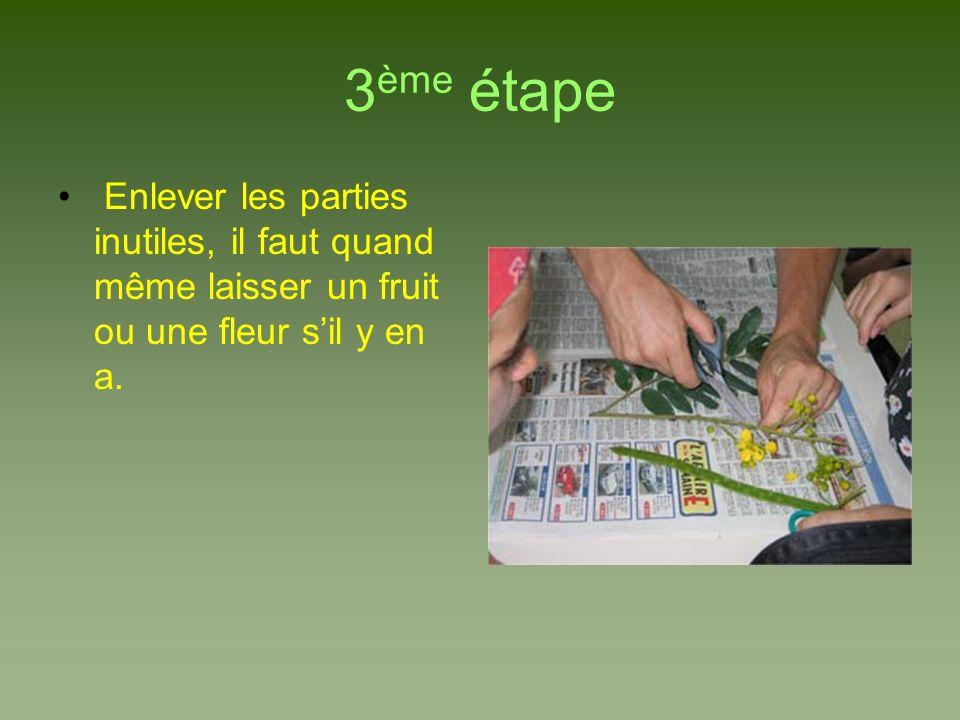 3 ème étape Enlever les parties inutiles, il faut quand même laisser un fruit ou une fleur sil y en a.