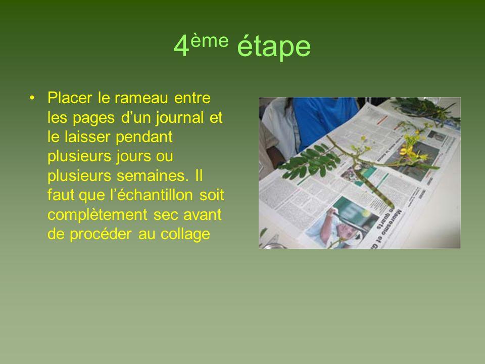 4 ème étape Placer le rameau entre les pages dun journal et le laisser pendant plusieurs jours ou plusieurs semaines. Il faut que léchantillon soit co
