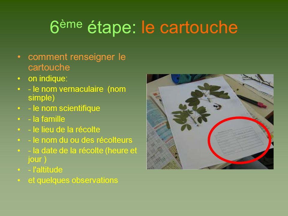 6 ème étape: le cartouche comment renseigner le cartouche on indique: - le nom vernaculaire (nom simple) - le nom scientifique - la famille - le lieu de la récolte - le nom du ou des récolteurs - la date de la récolte (heure et jour ) - l altitude et quelques observations