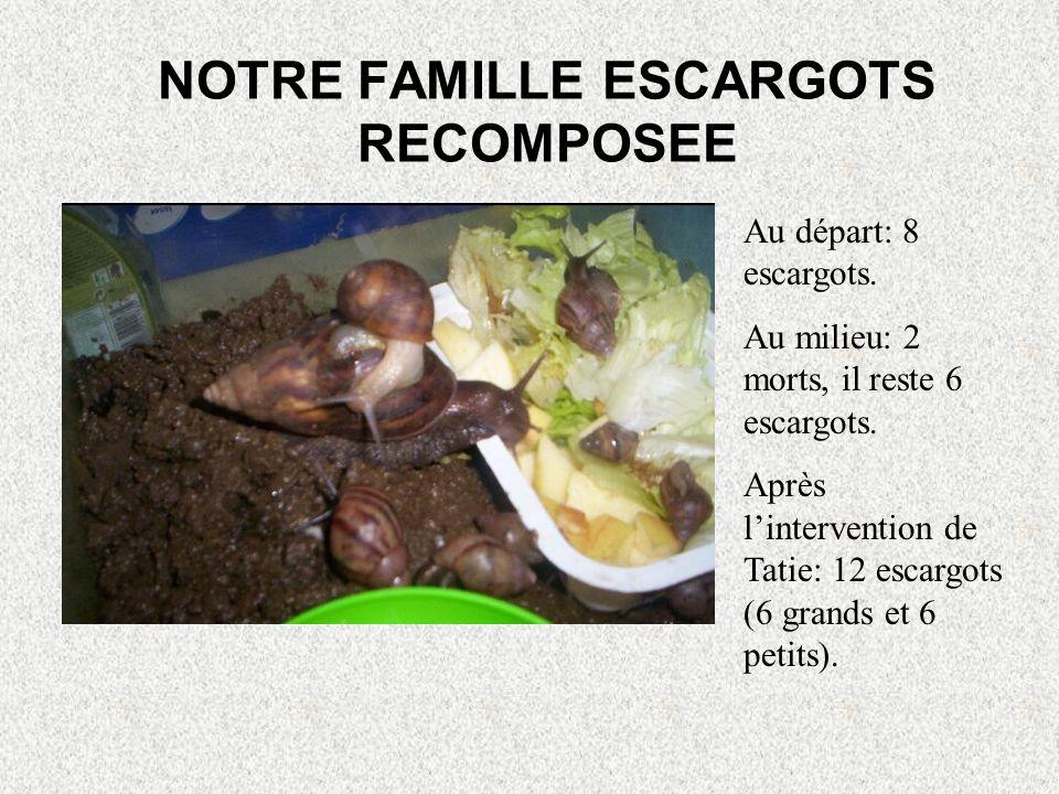 POUR NOUS CONSOLER! Tatie Josie nous a rapporter des bébés escargots de son jardin.