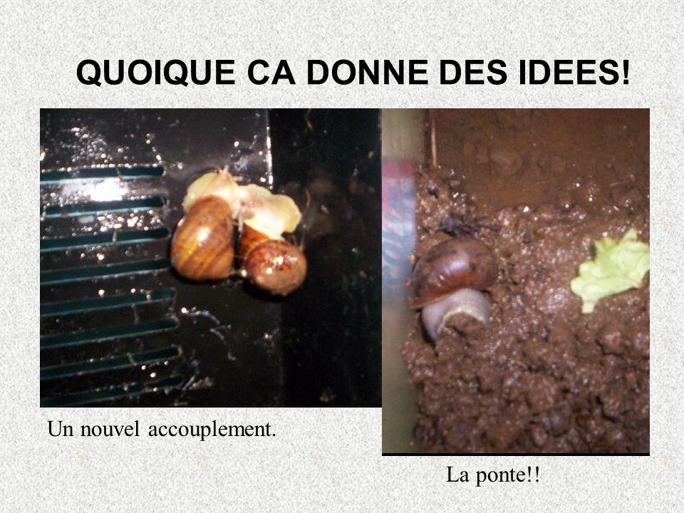 NOTRE FAMILLE ESCARGOTS RECOMPOSEE Au départ: 8 escargots. Au milieu: 2 morts, il reste 6 escargots. Après lintervention de Tatie: 12 escargots (6 gra
