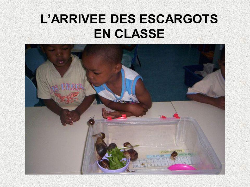 LARRIVEE DES ESCARGOTS EN CLASSE