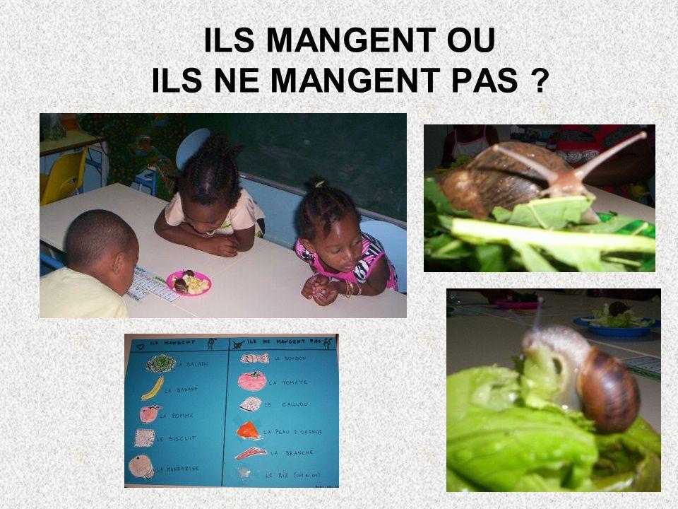 QUE MANGENT-ILS? Instinctivement les enfants vont apporter de la salade et des fruits! Nous testons toute sorte de nourriture, notamment celle de la c